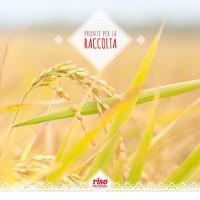 È finalmente arrivato il momento di raccogliere il frutto della nostra terra. Il vostro #riso.  #risodellasardegna #fitness #food #health #healthy #healthyfood #restaurant #mangiaresano #mangiare #sardegna #sardinia